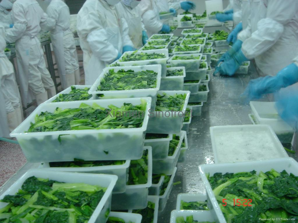 盤凍小松菜段,單凍小松菜段 1