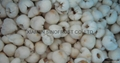 IQF Lychees ,Frozen Litchi,IQF Litchis,Frozen Lychees 15