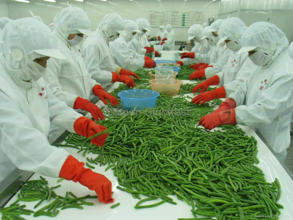 IQF whole green beans ,Frozen green beans wholes,IQF cut green beans 7