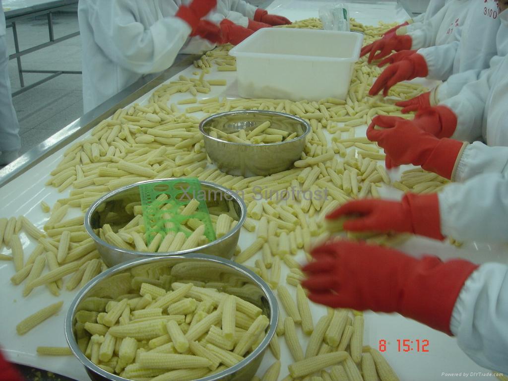 IQF Babycorns Cuts,IQF Cut Baby Corns,Frozen Babycorn Cuts 4