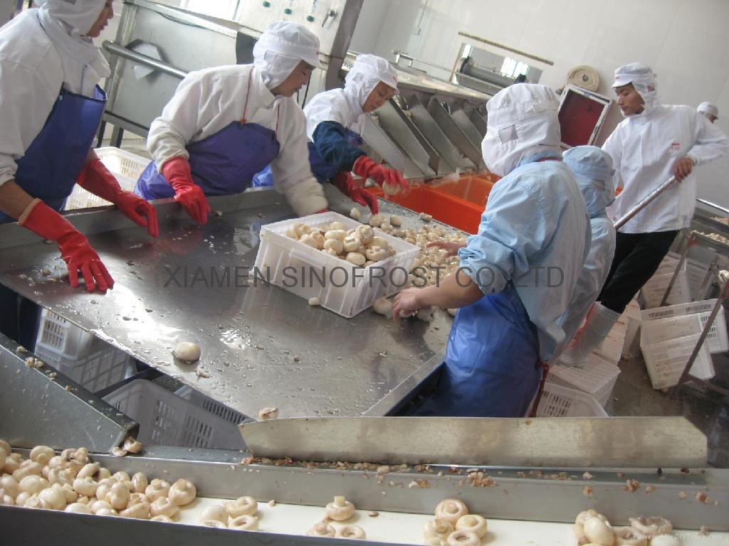 IQF champignon mushrooms,Frozen mushrooms,IQF mushrooms(slices/wholes/cuts ) 5