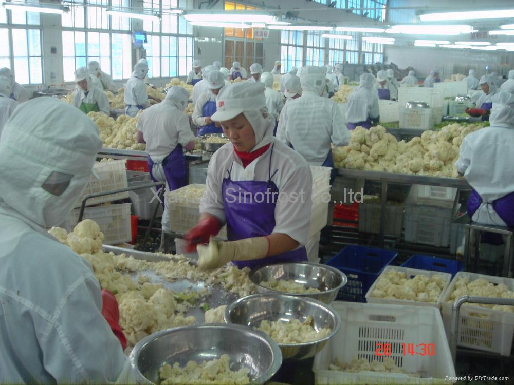 IQF cauliflowers florets,Frozen cauliflowers florets 4