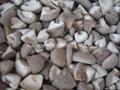 冷凍香菇,速凍香菇 3