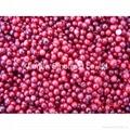 IQF Wild Lingonberries,Frozen Wild Lingonberries