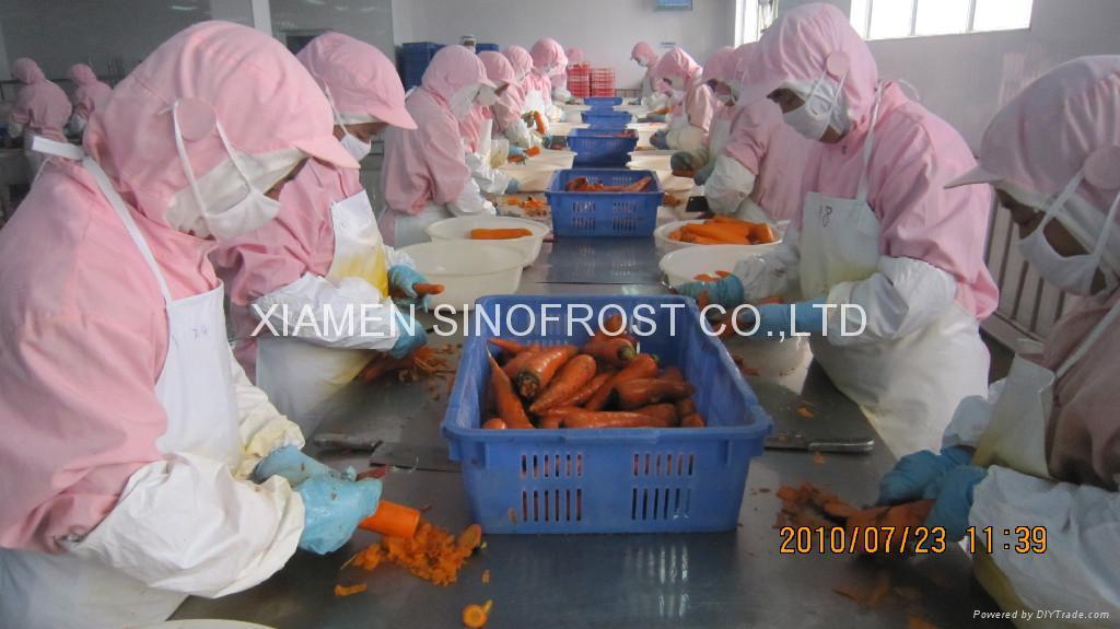 IQF carrots Frozen carrots strips/diced/cuts 3