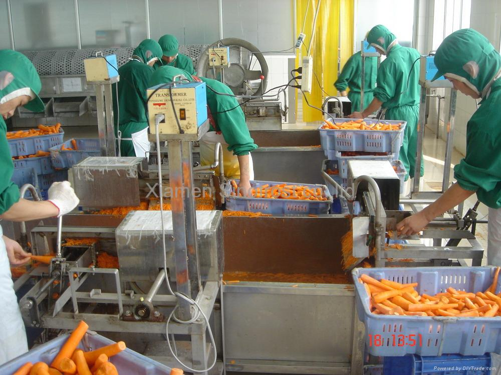 IQF Carrots, Frozen Carrots ,strips/diced/cuts/crinkle slices 4