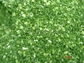 冷凍青蔥丁,速凍青蔥丁 4