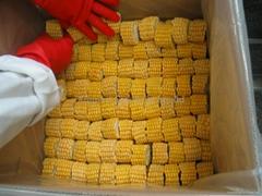 Frozen sweet corns,IQF sweet corns,cuts