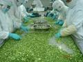 冷凍青蔥丁,速凍青蔥丁 11