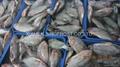 Frozen Tilapia Fillets,Frozen Whole Tilapia  4