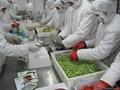 冷凍混合蔬菜,速凍混合蔬菜 15