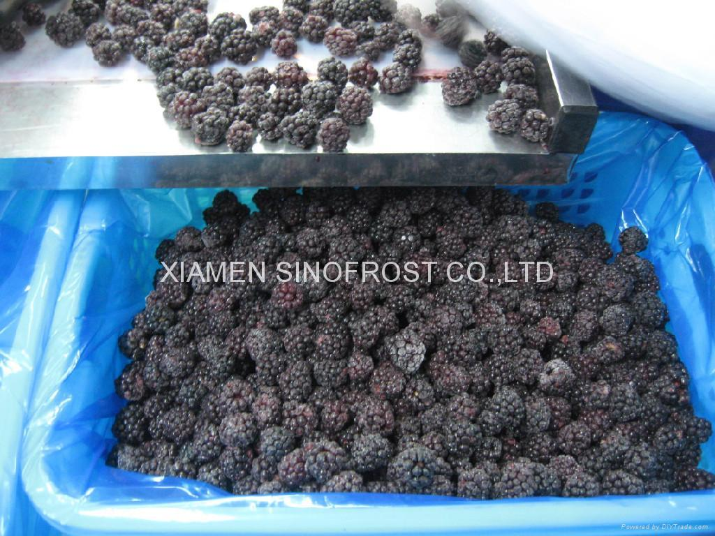 IQF blackberries,Frozen blackberries,cultivated 4