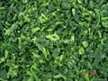 單凍菠菜段,盤凍菠菜段,冷凍菠菜葉球 4