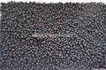 IQF blueberry,IQF Blueberries,Frozen Blueberries,cultivated 5