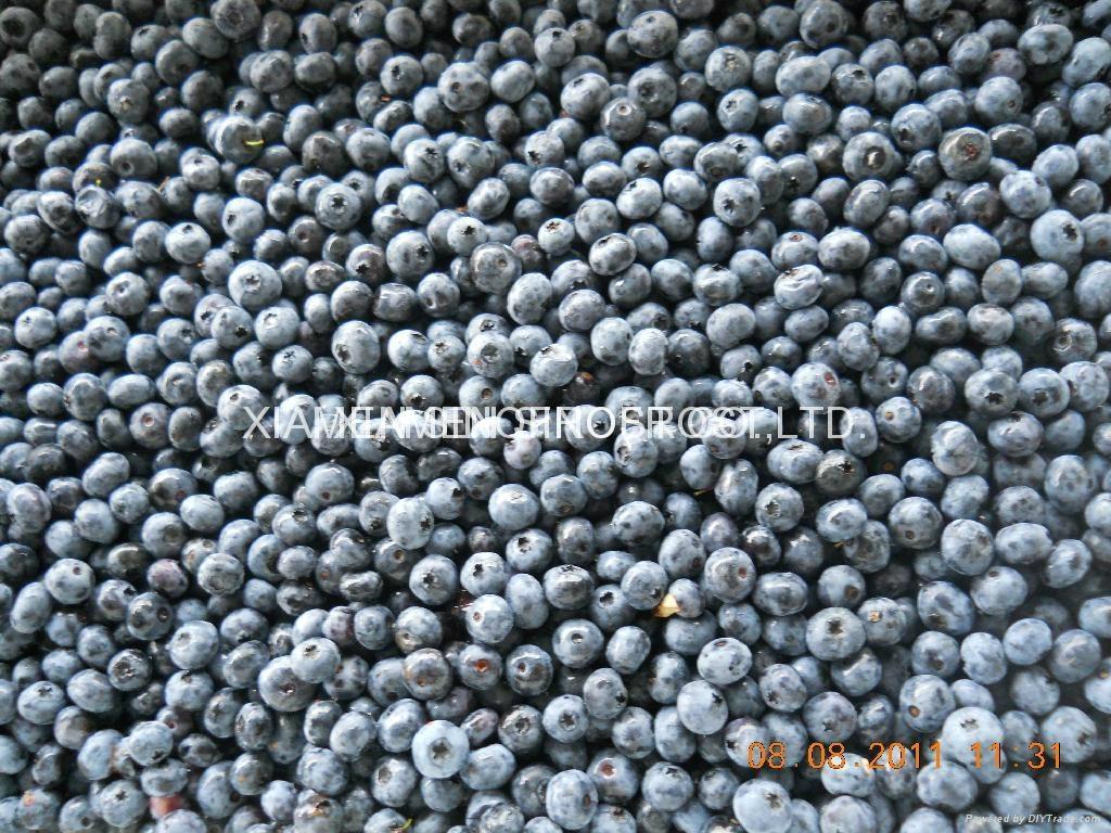 IQF Blueberries,  Frozen Blueberries,IQF Bilberry,Frozen Bilberries 2