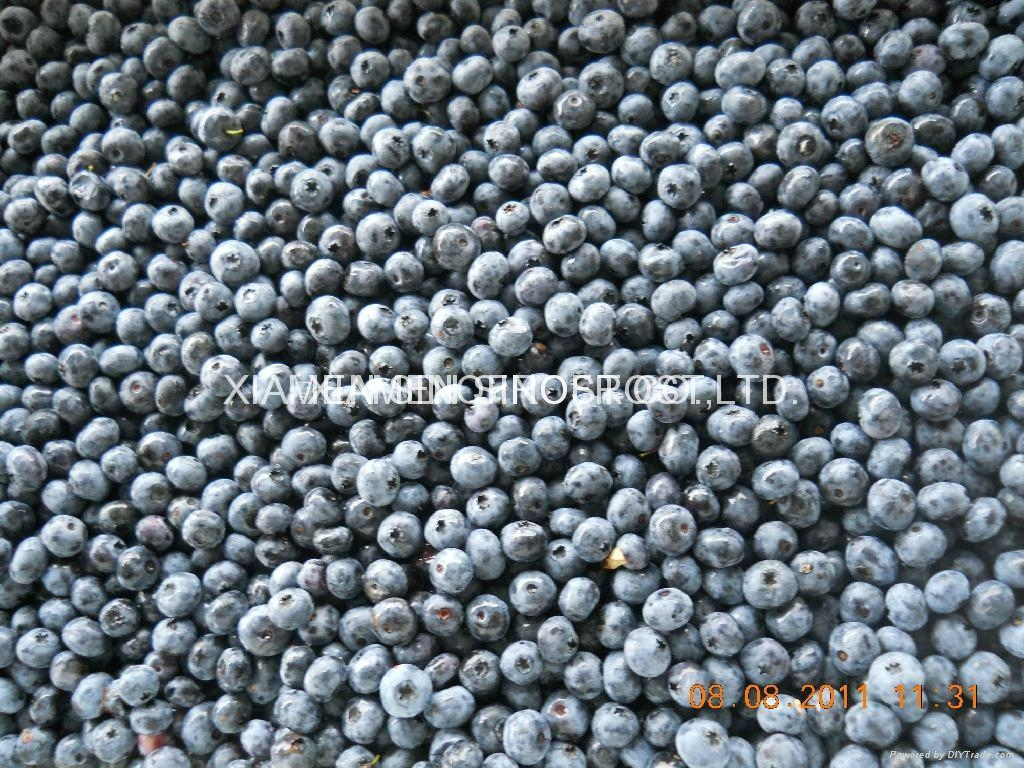 IQF blueberry,IQF Blueberries,Frozen Blueberries,cultivated 4