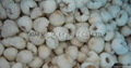 2019 New crop IQF lychees