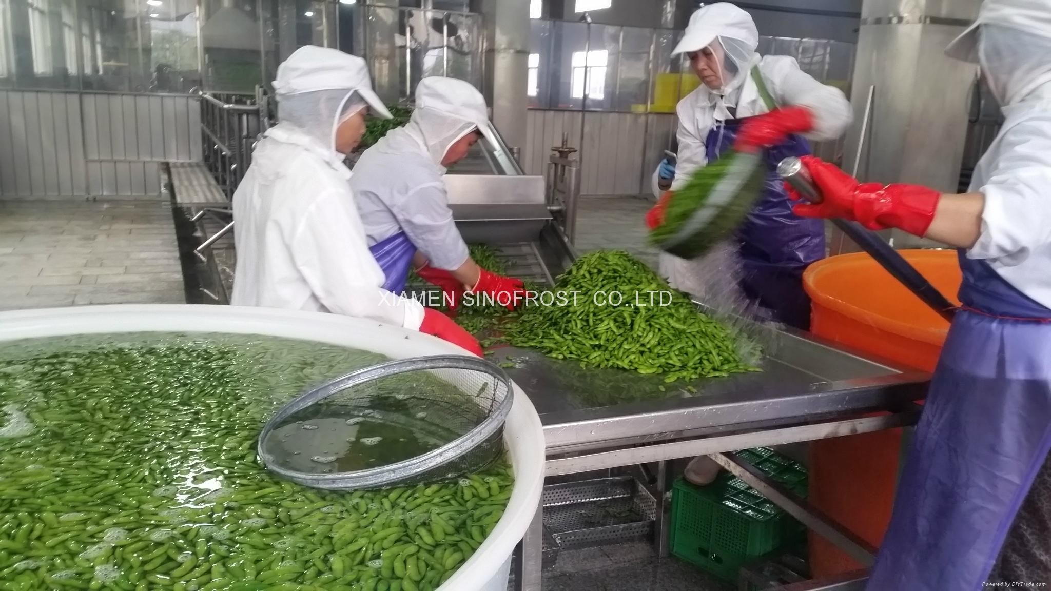 IQF Edamame,Frozen Edamame,IQF Green Soy Beans,Frozen Green Soy Beans 10