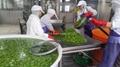 IQF Edamame,Frozen Edamame,IQF Green Soya Beans,Frozen Green Soya Beans