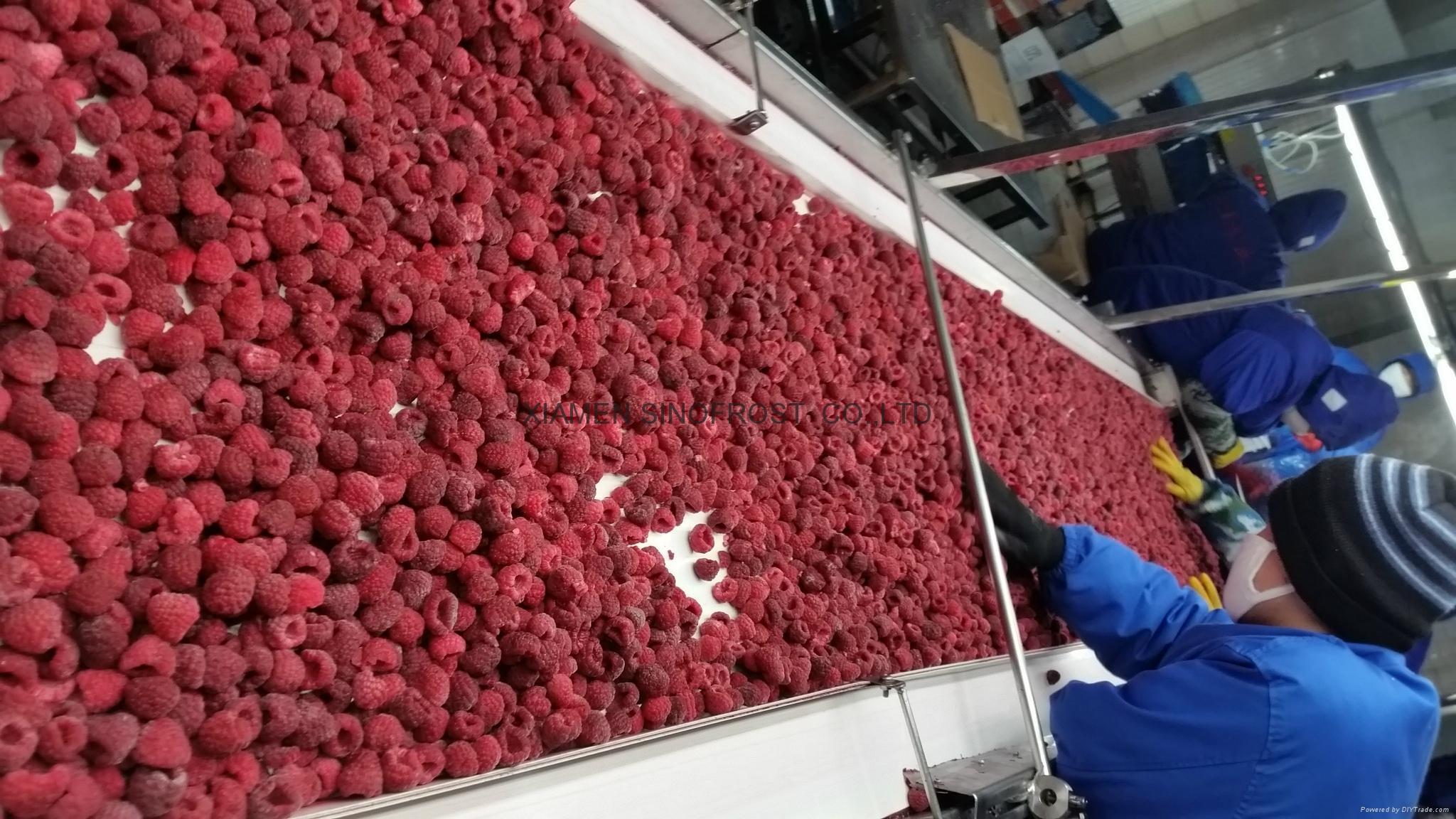 IQF Raspberries,Frozen Raspberries,wholes/brokens/crumbles/puree 8