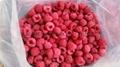 IQF Raspberries,Frozen Raspberries,wholes/brokens/crumbles/puree 11