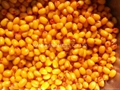 IQF Sea Buckthorn(Havthom),Frozen Sea Buckthorn