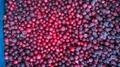 IQF Wild Lingonberries,Frozen Wild