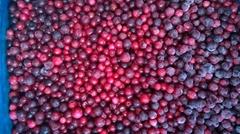 冷冻越桔,速冻越桔,冷冻红豆,速冻红豆