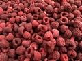 IQF Raspberries,Frozen Raspberries,wholes/brokens/crumbles/puree 2