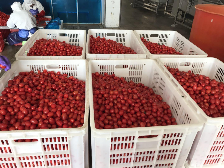 IQF cherry tomatoes,Frozen cherry tomato,wholes/slices/ha  es/dices 8