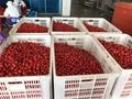 IQF cherry tomatoes,Frozen cherry tomato,sliced/halves