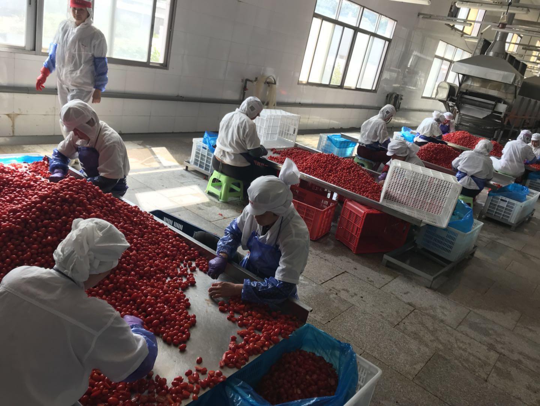 IQF cherry tomatoes,Frozen cherry tomato,wholes/slices/ha  es/dices 9