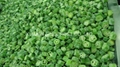IQF okra,new crop