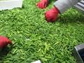 冷凍蒜苔,速凍蒜苔 4
