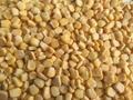 Frozen Sweet corn Kernels,IQF Sweetcorn