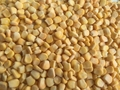 Frozen Sweet corns Kernels,IQF