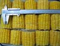 IQF Sweet Cob Corn,Frozen Sweet Corn on the COB,Frozen Cob Corn 14