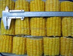 IQF sweetcorn COB,Frozen sweet corn COB,IQF sweetcorn kernels