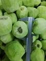 IQF Sliced Kiwi ,Frozen Sliced Kiwi,IQF Kiwi Slices,Frozen Kiwi Slices 5