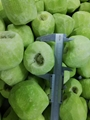 IQF Diced Kiwi,Frozen Diced Kiwi,IQF Kiwi Dices,Frozen Kiwi Dices