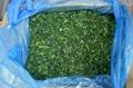 單凍菠菜段,盤凍菠菜段,冷凍菠菜葉球 8