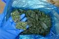 單凍菠菜段,盤凍菠菜段,冷凍菠菜葉球 9