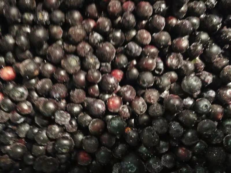 冷凍藍莓,速凍藍莓 9