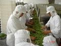 IQF Cut Green Beans,Frozen Cut Green Beans,IQF Green Beans Cuts 14