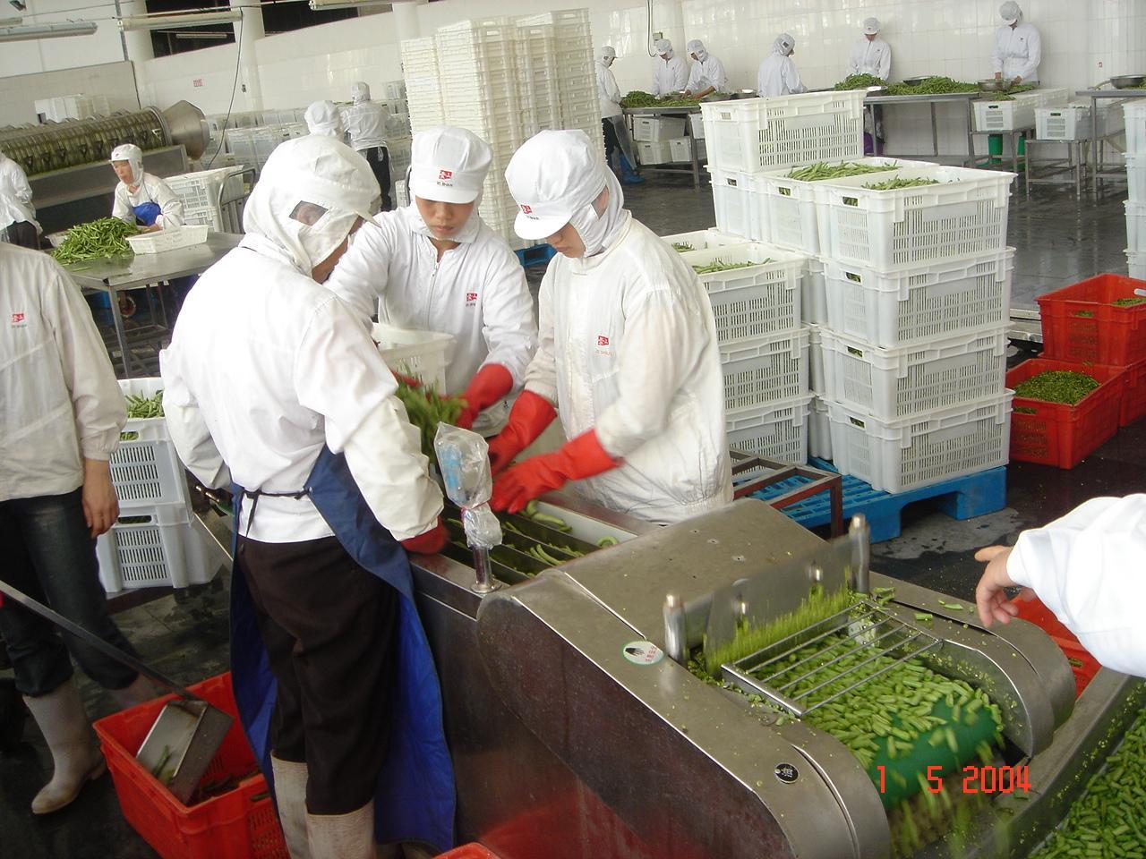 IQF Cut Green Beans,Frozen Cut Green Beans,IQF Green Beans Cuts 15