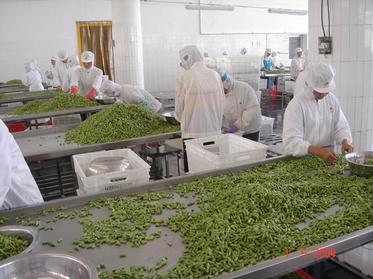 IQF Cut Green Beans,Frozen Cut Green Beans,IQF Green Beans Cuts 16