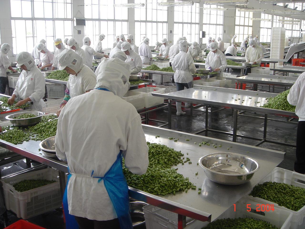 IQF Cut Green Beans,Frozen Cut Green Beans,IQF Green Beans Cuts 17