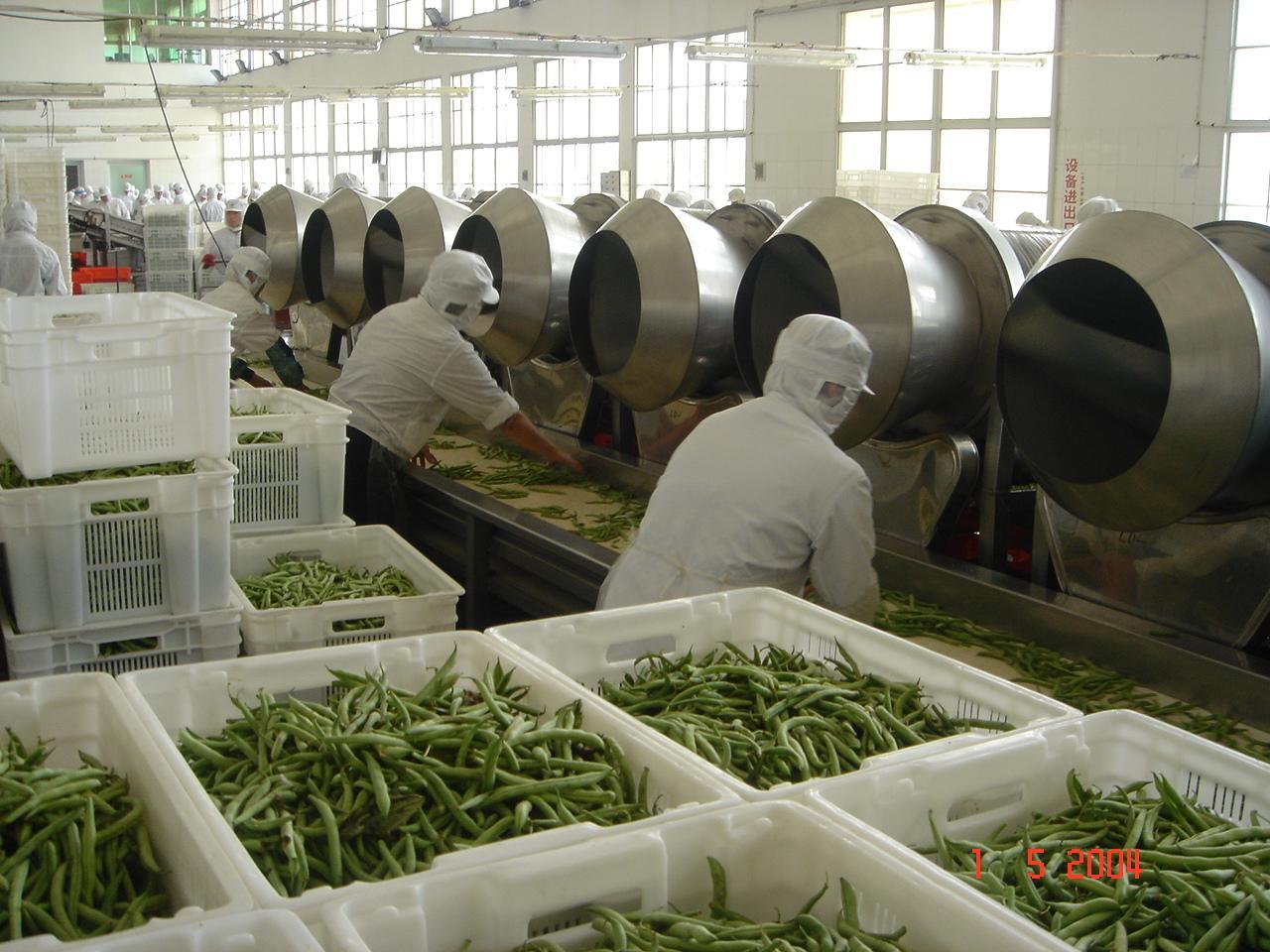IQF Cut Green Beans,Frozen Cut Green Beans,IQF Green Beans Cuts 18
