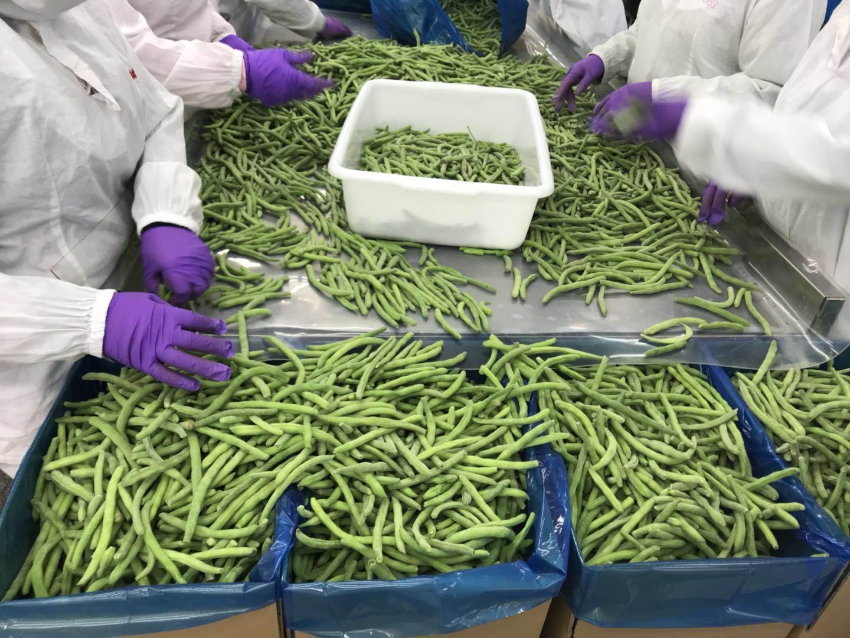 IQF Cut Green Beans,Frozen Cut Green Beans,IQF Green Beans Cuts 12
