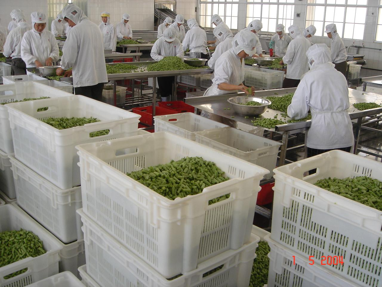 IQF Whole Green Beans ,Frozen Green Beans Wholes,IQF cut green beans 12